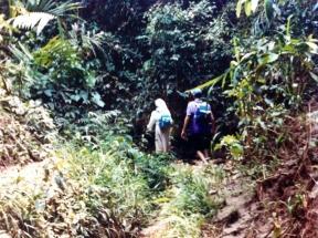Internándose en la selva.